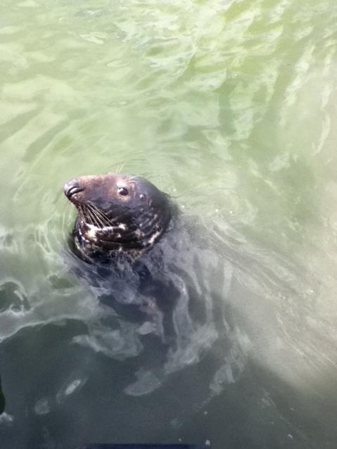 wild-eyed-seal